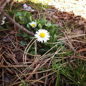 A blog is like a flower...it must grow with things such as sunlight, useless images, and BS...