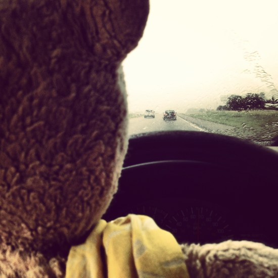 In you follow me on instagram, you know I chronicle my adventures with my 23 year old bear Bloomie.  (nicknamed Bloomz).  So much rain.