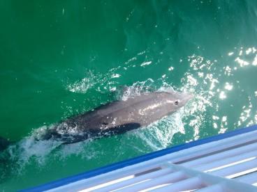 A dolphin...