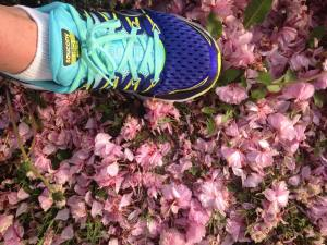 A photo of the Saucony triumph on some flowers...