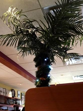 Tropicana tree