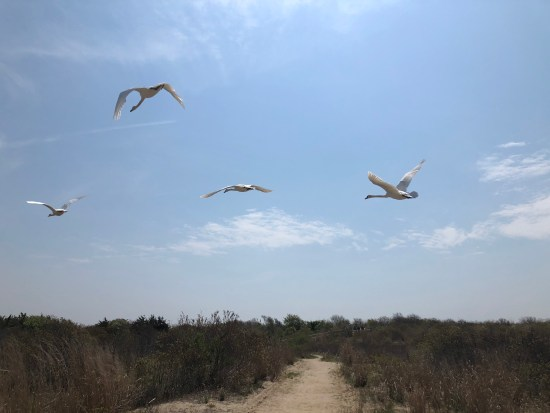 cape may state park