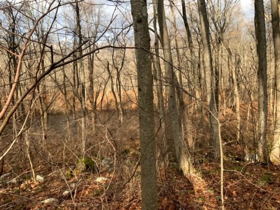 Hiking Stephens State Park (specifically the Orange, White and White Rumbly Climb Loop trail)