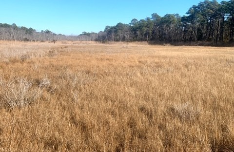 Walking Dunes Trail in Cape Henlopen State Park (Lewes Delaware)
