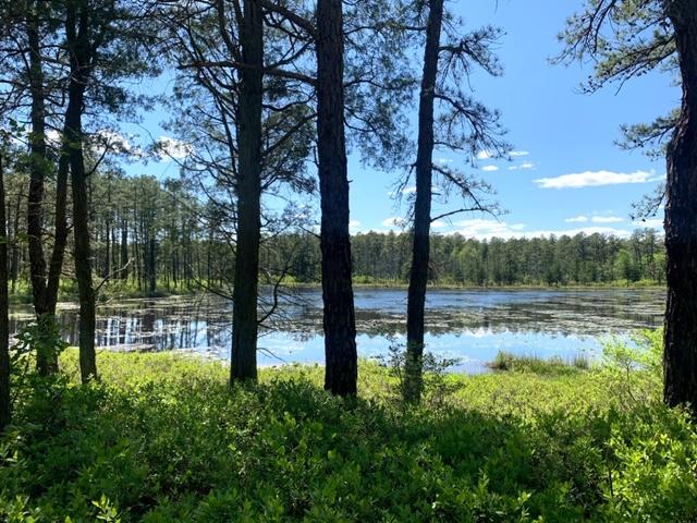 Batsto River Trail (Wharton State Park)