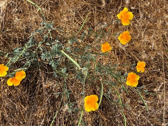wildflowers Exploring Alston Park in Napa, CA