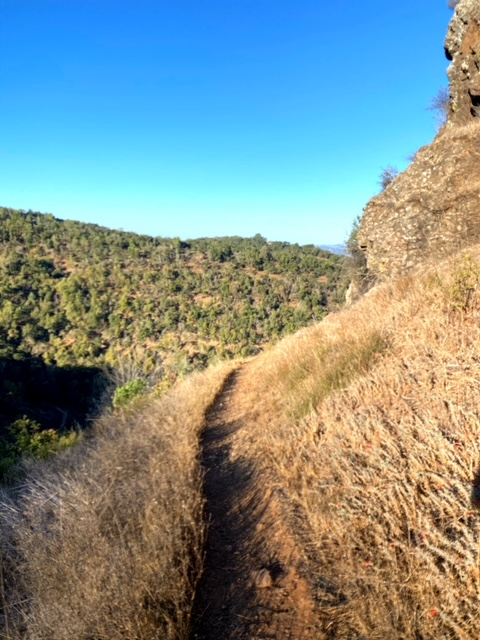 Buckeye Trail in Skyline Wilderness Park (Napa)