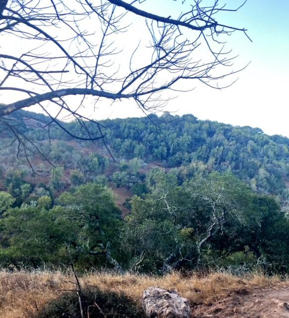 Buckeye Trail in Skyline Wilderness Park (Napa)