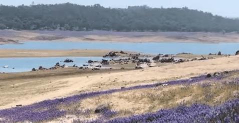 Folsom Lake and Browns Ravine