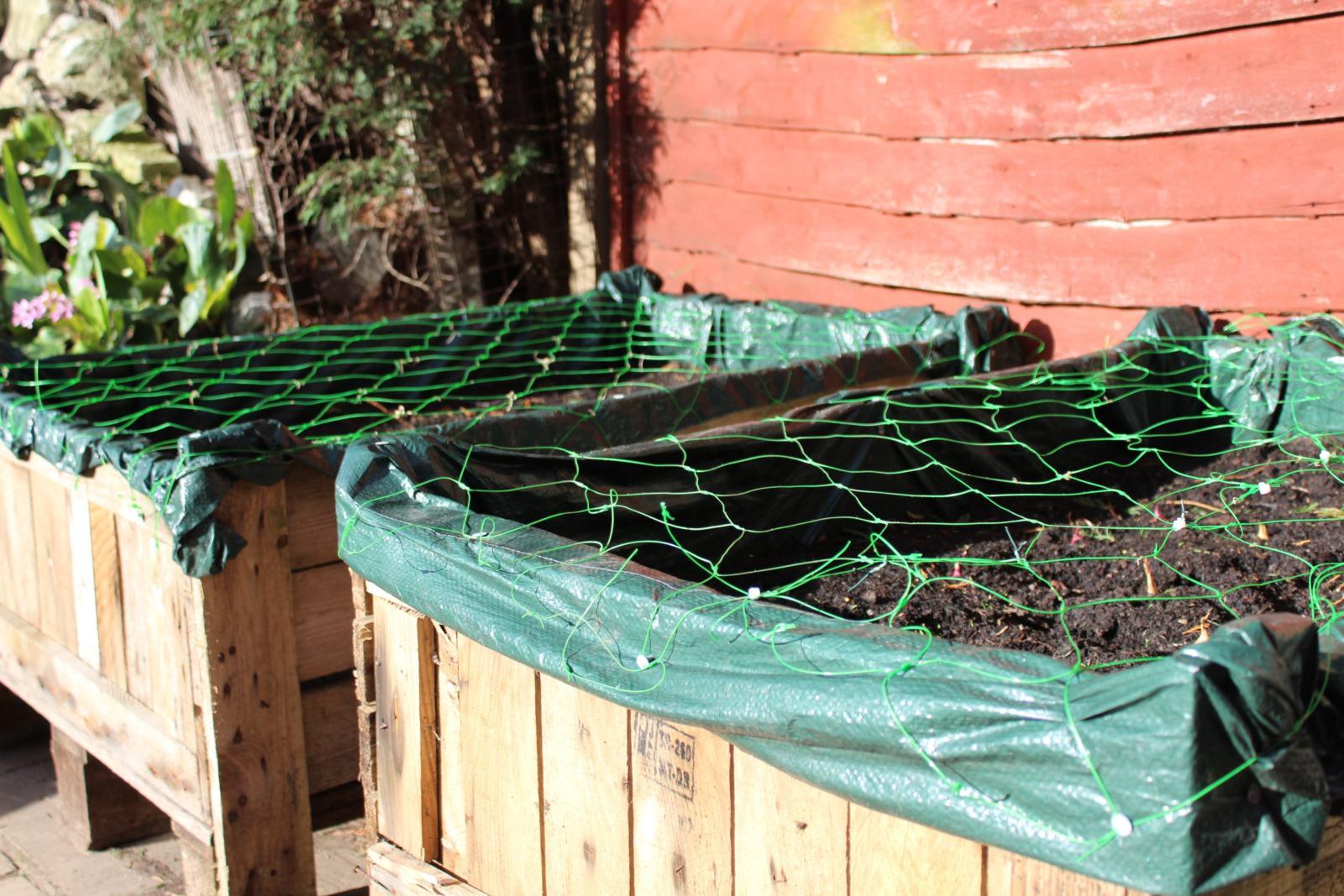 first time vegetable garden update