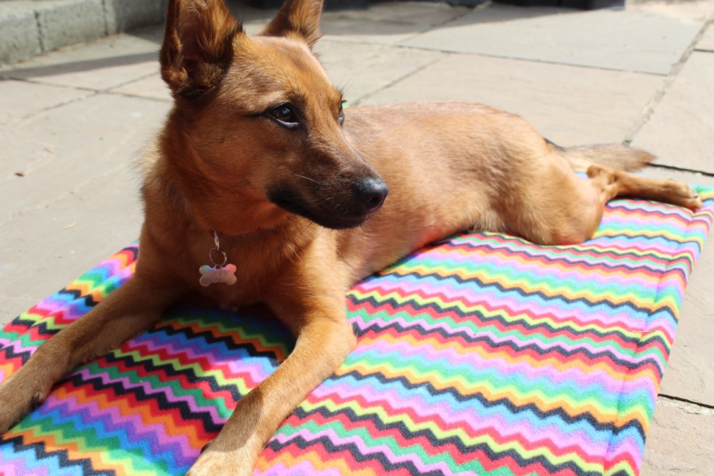 How to Make a Fleece Dog's Bed