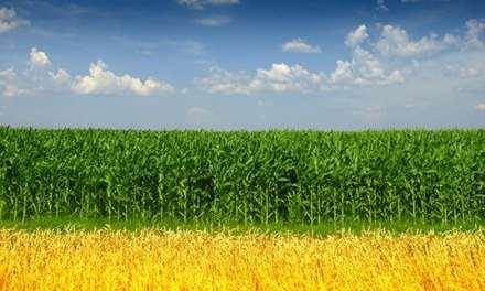 EIA: U.S. Ethanol Exports in 2014 Reach Highest Level Since 2011