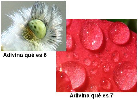 adivinaquees6y7