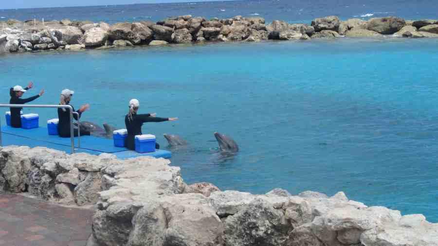 Seaquarium Curaçao