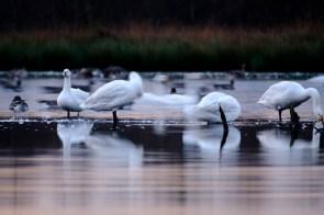 ben-cherry-flight-of-the-swans-germany-16