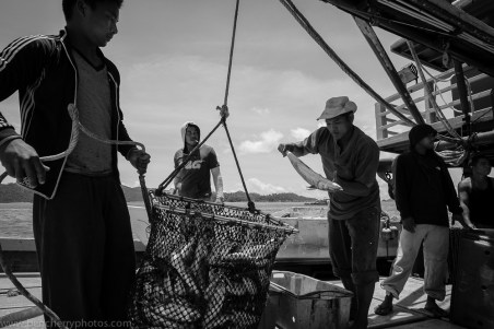 Checking the catch