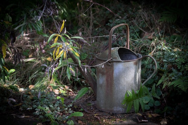 Watering can. 1/280sec at f/3.2, ISO 400