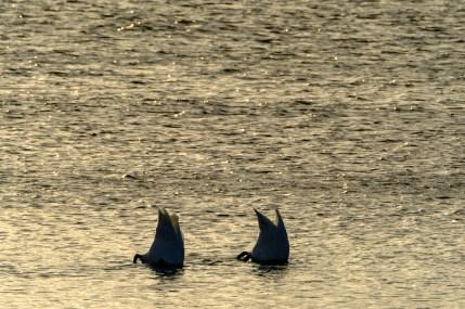 ben-cherry-flight-of-the-swans-baltics-14