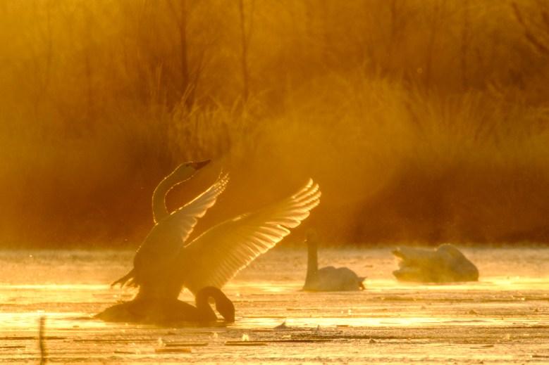 ben-cherry-flight-of-the-swans-germany-34