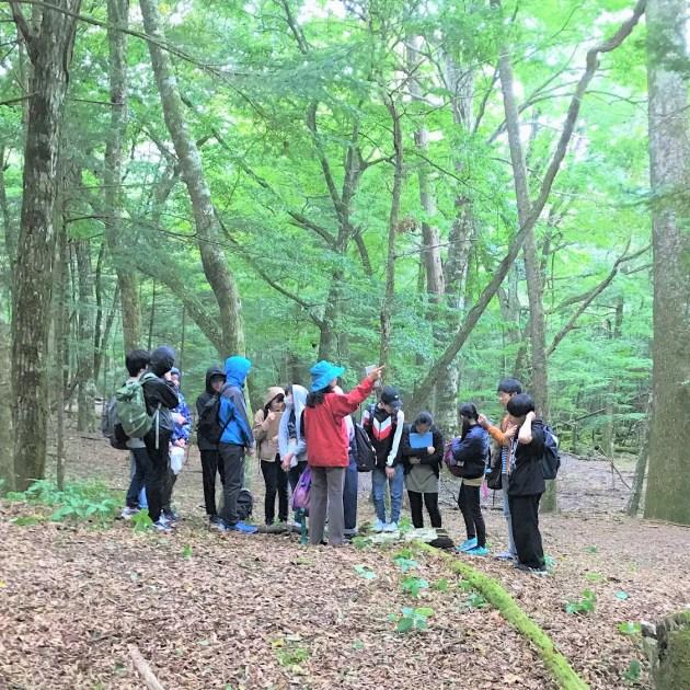 森の植生調査