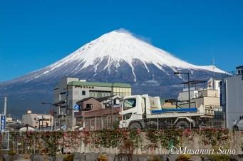 世界遺産センター東側の富士山せせらぎ広場より