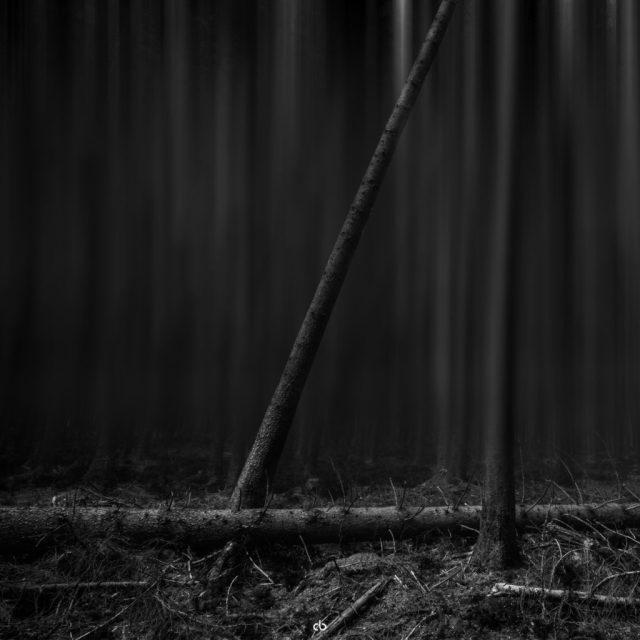 Black Forest - bw | Landscape | Fujifilm | X-T1 | 12mm Walimex