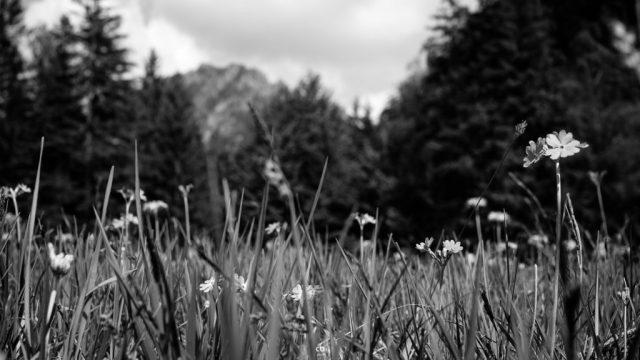 Blumen in den Alpen - Landscape | Fujifilm | X-T1 | 35mm