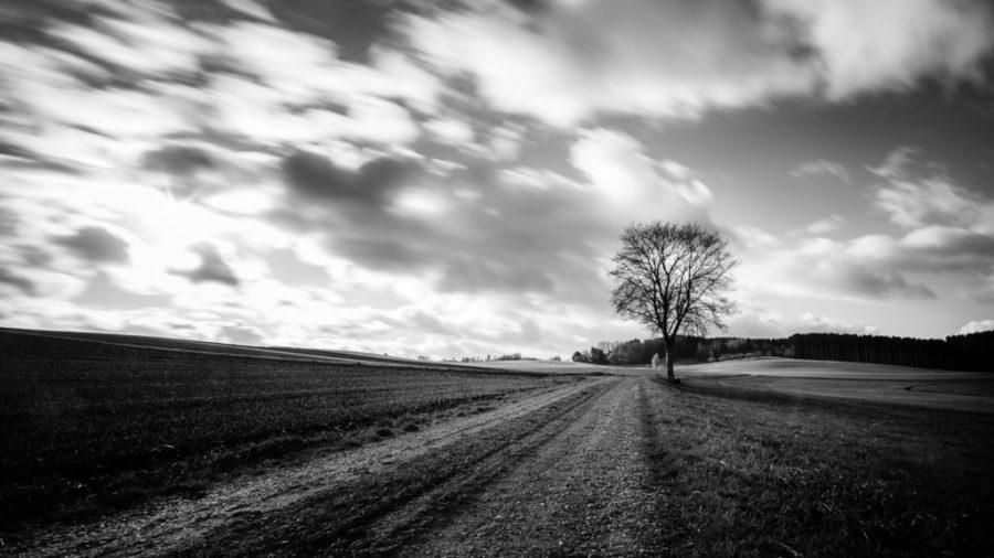 Baum am Wegesrand | Fujifilm | X-T1 | 12mm