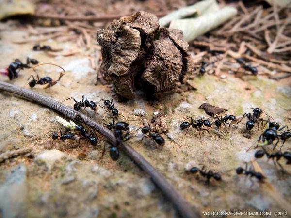 Fujifilm Finepix X10 Macro de hormigas