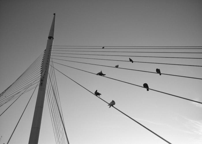 """Ramas urbanas"" por Fran Imbernón, con Fuji X-Pro2 + XF 23mm f/1.4 R."