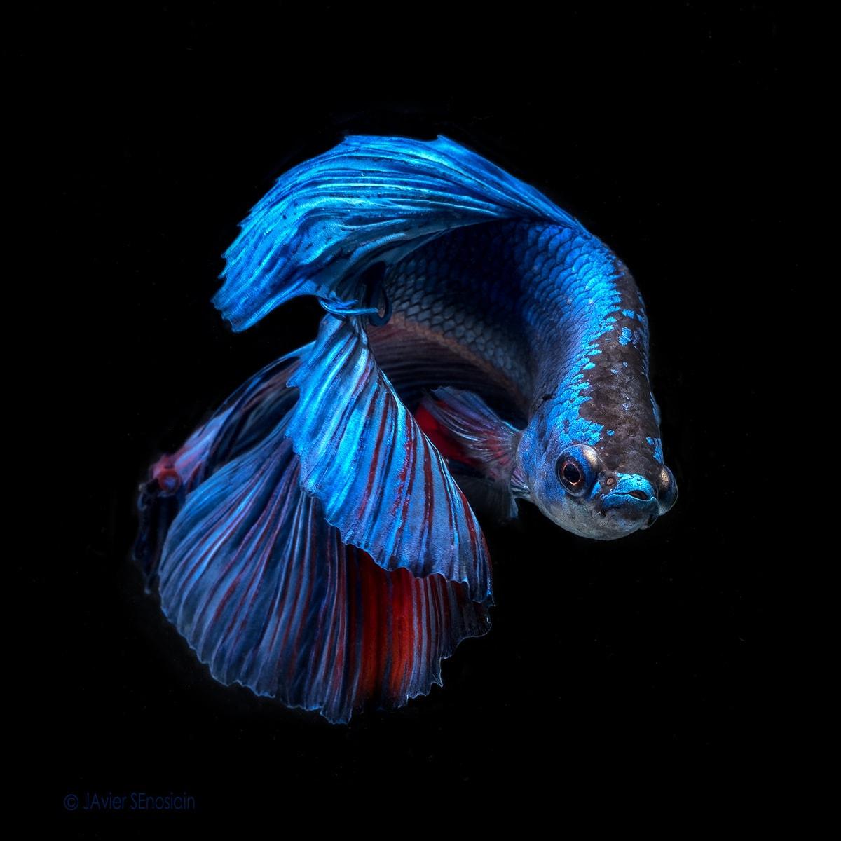 """Azul eléctrico"" por Javier Senosiain. X-T2 + XF 60mm F2.4."