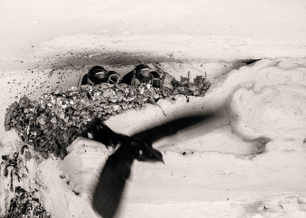 """Vuelve pronto mamá"" por Juan Lozano. Fuji X-T2+XF 50-140mm F2.8."