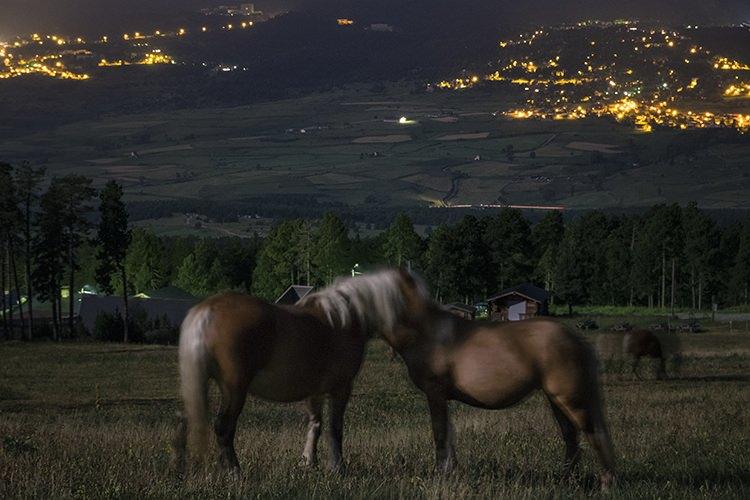 """""""Horses in love"""" por Dani Valdés. Con Fuji X-T2 + XF 18-55mm F2.8-4."""