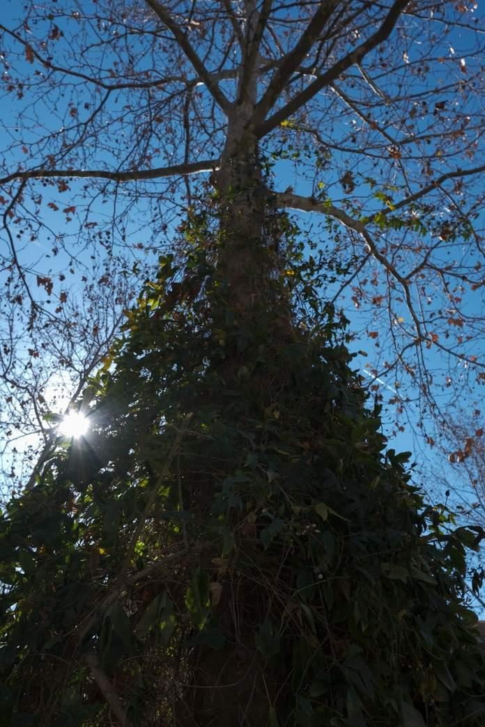 XT30 árbol
