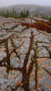Cadillac Mountain;Acadia NP, Maine; X-T1 10-24 by bill fortney