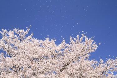 春の飾り付けを折り紙を使ってするのなら、これがおすすめ