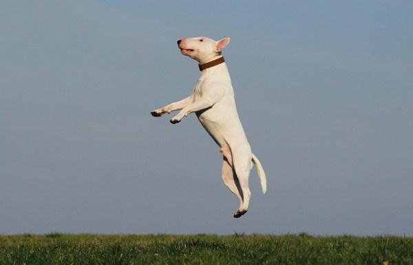 犬ジャンプ