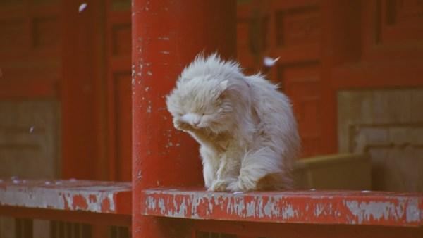 強風に立ち向かう猫