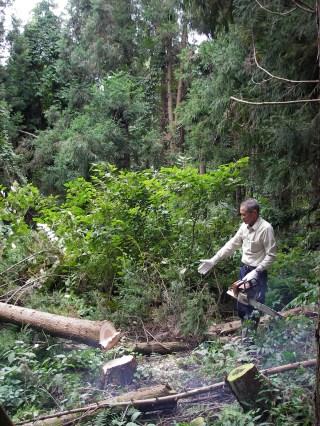山から木を切り出して製材して縁台を作って町に風情をつくるワークショップ1