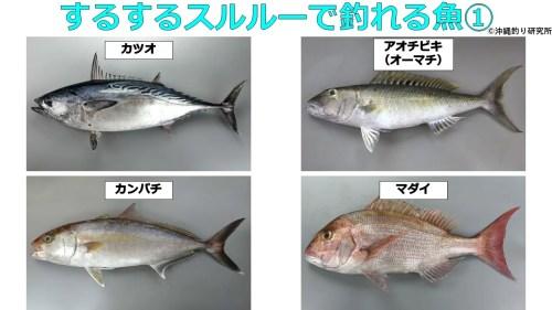 するするスルルーで釣れる魚