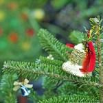 クリスマスツリーに本物の木を使いたい!木とオーナメントの選び方