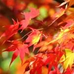 鎌倉紅葉おすすめスポット5選。絶対押さえるべき名所とライトアップ