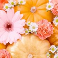 特養で秋祭りや収穫祭はいかが?屋台や出し物までとことん楽しもう!