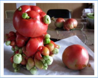 Vegetable mutation, Saitama (2012-01-04 14.05.46)