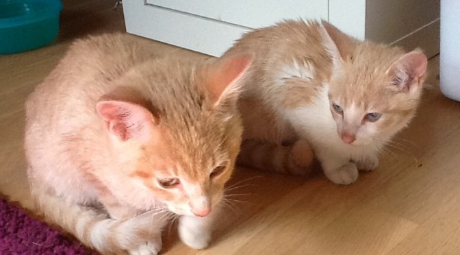 Ron og Ginny er flyttet ind :-)