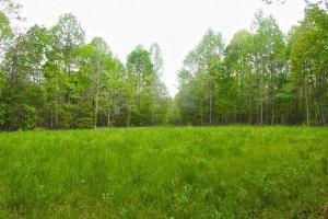 Green field property