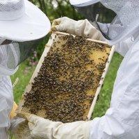 Participa la un curs apicultor si invata sa comunici cu albinele