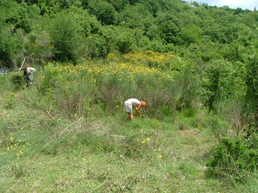 Clearing the scrub from Camp Full Monte.