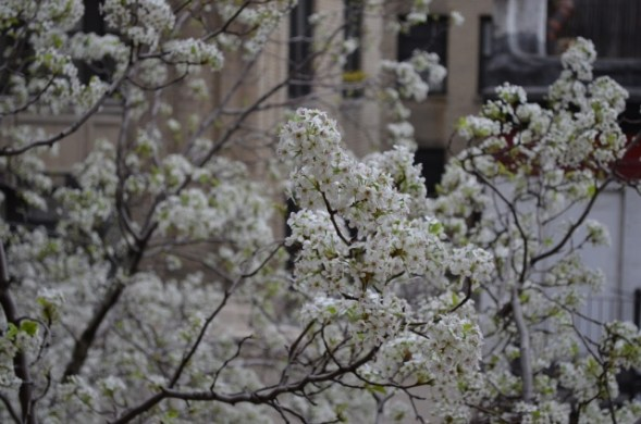 Budding Flowers on the Upper West Side