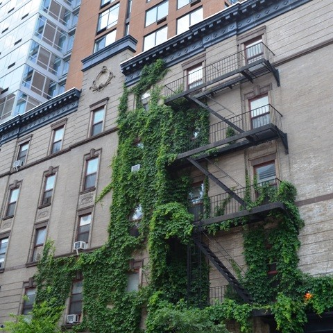 Ivy on an Apartment Building in NYC